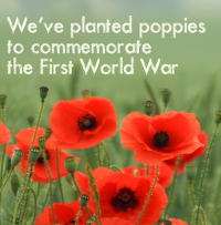 World War One Poppies